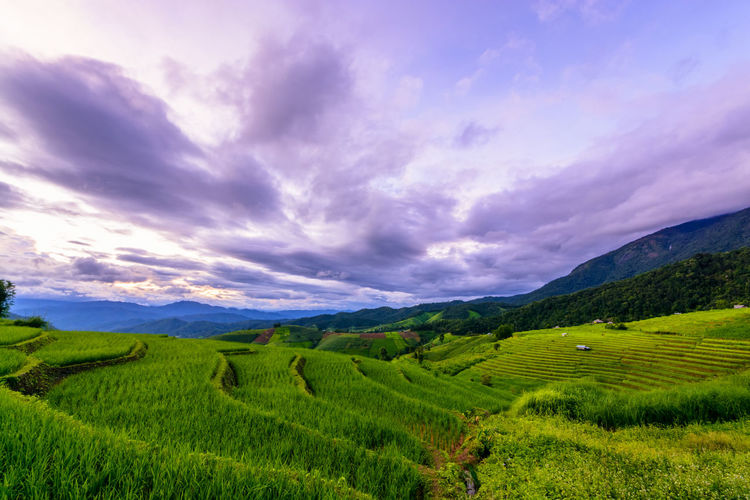 Chiang Mai | Thailand Chiangmai Agriculture Beauty In Nature Cloud - Sky Crop  Environment Field Green Color Growth Idyllic Land Landscape Mountain Mountain Range Nature No People Outdoors Plant Rural Scene Scenics - Nature Sky Tranquil Scene Tranquility