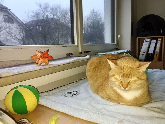 Dreaming Dreaming... Dreaming Cat Katzenfoto Tap That ❤  3XSPUnity Adorable Pets Adorable Cat  Lazy Cat Lazy Cat 🐈 Cat Portrait Cat Sleeping Positions Katzenfotografie Cats 🐱 Katzen 💜 Pets Close-up