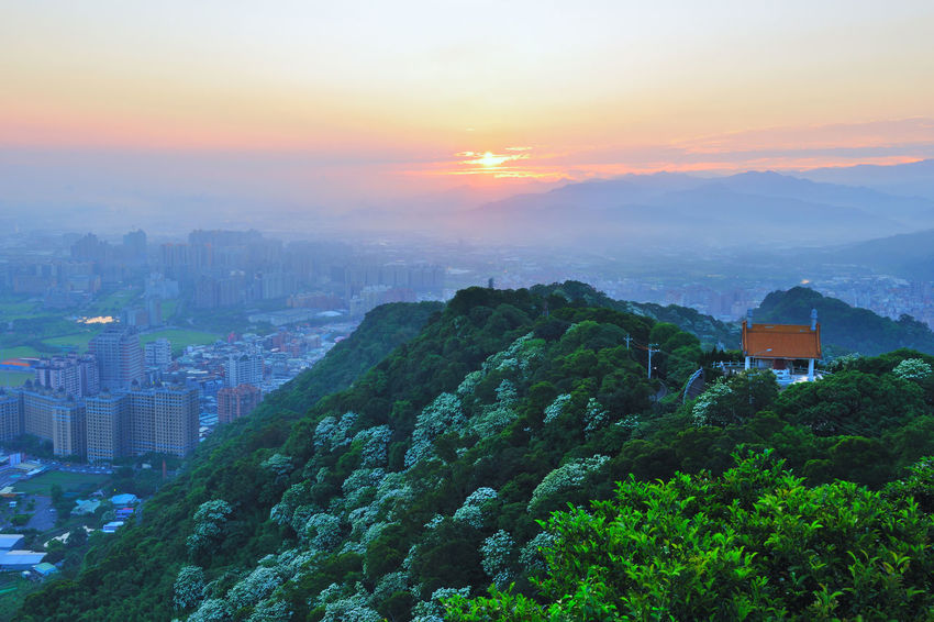 Early morning sun, full of warm hope. Beautiful City Architecture Beauty In Nature Building Exterior Built Structure City Cityscape Dawn Day Growth Modern Morning Fog Mountain Nature No People Outdoors Scenics Sky Skyscraper Sunrise Sunset Tree Tung Blossom Warm