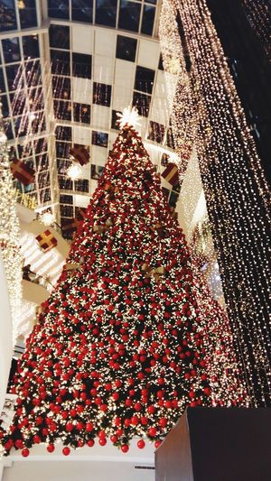 Tree Green Christmas Tree Christmas Lights Hanging Decoration Red Decor Beautiful Giant Jolly Holidays Magic In The Air The Culture Of The Holidays The Culture Of The Holiday