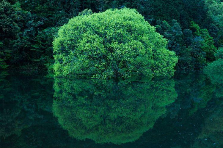夜明け前の室生湖 Fresh Green Nara Japan Japan Photography Murou Lake Lake Tree Backgrounds Cyberspace Close-up Green Color Sky Green Young Plant Water Drop