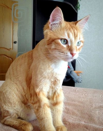 Cat Áfonya рыжий кот Афоня Afonsiko Cat♡ Cats