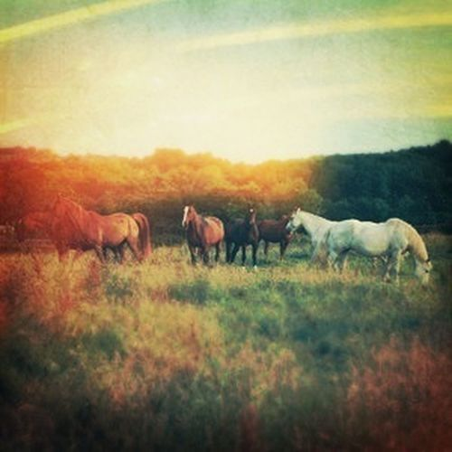 With Ma Horses