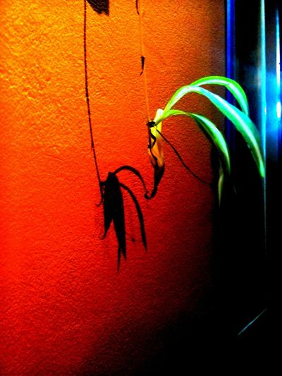 Flower Wall Shadow Bug Shadow