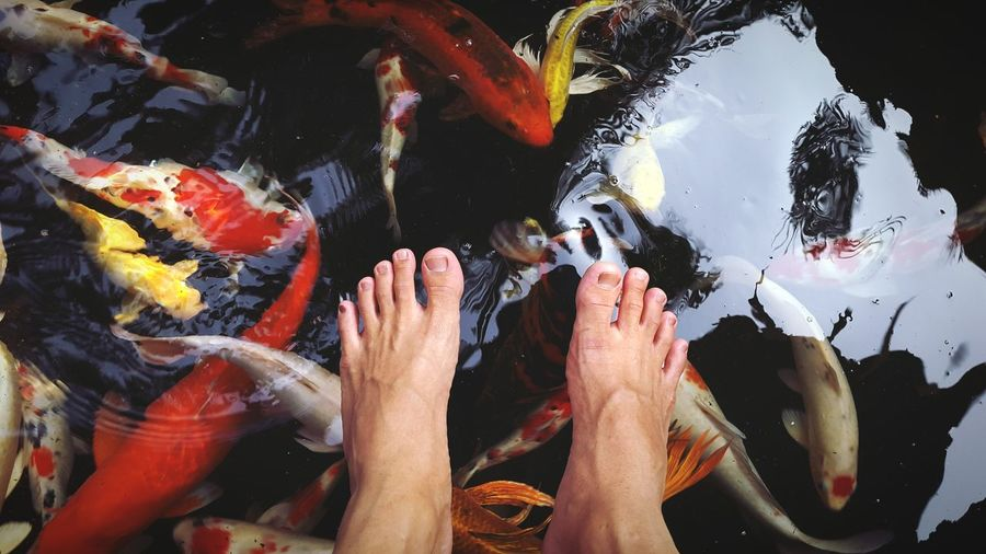 Low Section Of Man Feet Over Pond With Koi Carps