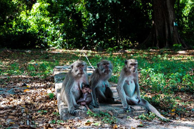 Monkeys sitting on field in a forest