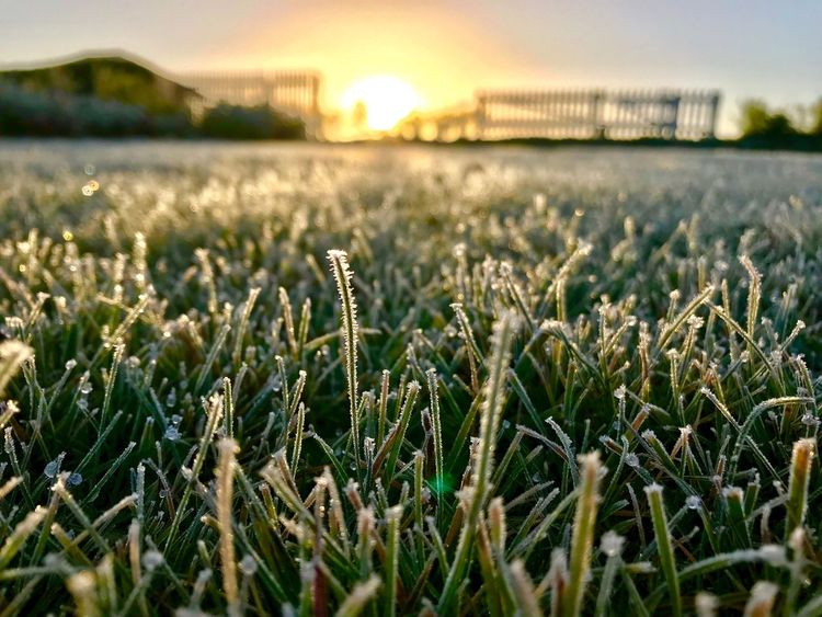 der erste frost hat uns heute nacht besucht 🤧 Growth Outdoors Sky No People Tranquility Sunset Water Landscape Beauty In Nature Day Close-up Grass Frost Frozen
