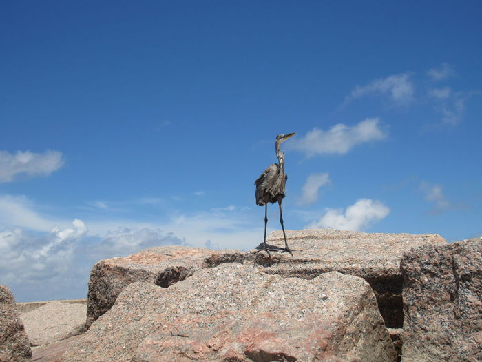 On Top Of The World Blue Blue Heron Bird Cloud Cloud - Sky Day In Front Of Low Angle View Nature No People Outdoors Remote Rock - Object Rocky Sky Solitude Tranquil Scene Tranquility Premium Collection