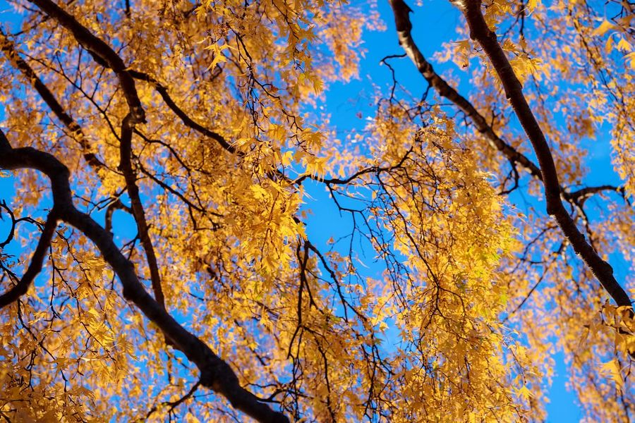 Autumn colors Tree Plant Low Angle View Branch Beauty In Nature Sky Autumn Nature No People Change Leaf Outdoors Backgrounds Sunlight Blue Plant Part Day Growth