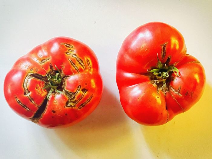Home Grown Red Close-up Food Fresh Freshness Garden Healthy Healthy Eating Healthy Lifestyle Produce Summer Tomatoes Vegetable Veggies
