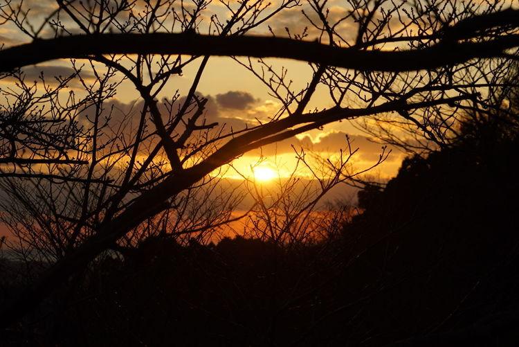 Silhouette bare trees against orange sky