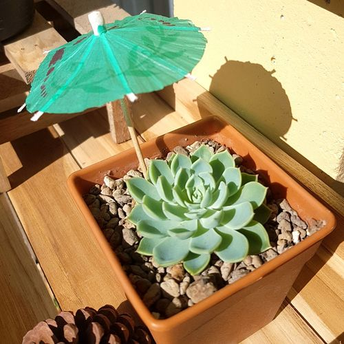 Cactus Green Color High Angle View Plant Nature Growth Day No People Outdoors Prickly Pear Cactus Close-up Freshness
