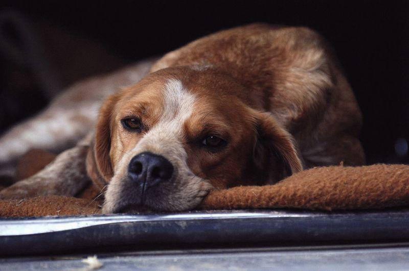 Bruno Dog Canine Pets One Animal Domestic Domestic Animals Animal Themes