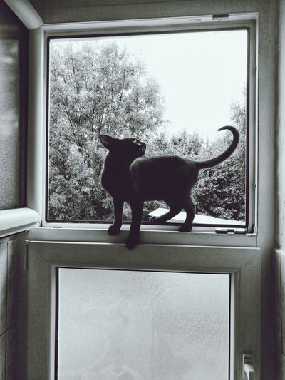 Cats Of EyeEm Cat On The Window Black Cat One Animal EyeEm Animal Lover EyeEmNewHere