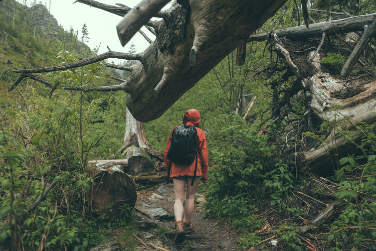 Rear View Of Woman Hiking In Forest
