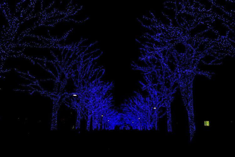 blue illuminated trees in Yoyogi park,Shibuya,Japan Nightphotography Night Night Lights Yoyogi Park Shibuya Japan Blue Lagoon Blue Illumination Winter Illumination Blue Tree Illuminated Bare Tree No People Outdoors