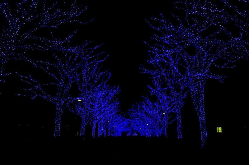 blue illuminated trees in Yoyogi park,Shibuya,Japan Nightphotography Night Night Lights Yoyogi Park Shibuya Japan Blue Lagoon Blue Illumination Winter Illumination Blue Tree Illuminated Bare Tree No People Outdoors