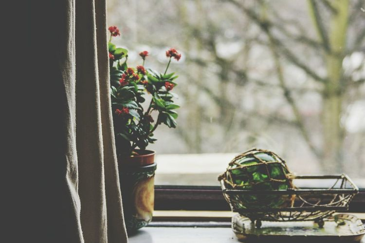 Flower No People Tree Beauty In Nature Freshness Nature Fragility Day Indoors  Close-up Lieblingsteil Vintage Style Windows Window Retro Vintage Interior Views Interior Interior Design Decor Window Sill Green Glass Witches Ball Glass Plant