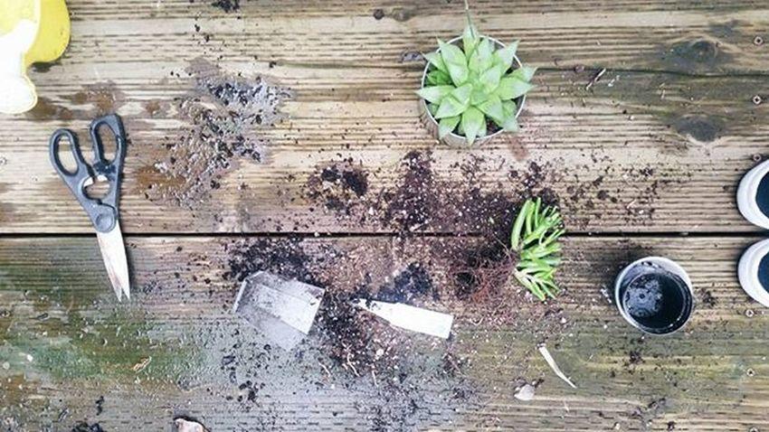 72/366 | A little dirt don't hurt. 😚 366Project Day72 Goldenbullet366 Saturdaze Succulentgarden Succulentlove Plantparty Repotting Transferring Gardening Aloe Aloeblossom Recycledcandlejar Diyprojects Diysaturday Diyweekend Photooftheday