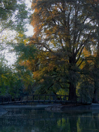 Trees and bridge in one of the smaller lakes of Chapultepec Park in Mexico City, Mexico Mexico Mexico City Soft Tree Trees Autumn Beauty In Nature Branch Bridge Chapultepec Chapultepec CDMX Day Lake Nature No People Outdoors Reflection Scenics Sky Softness Tranquil Scene Tranquility Tree Water Waterfront