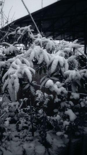 Taking Photos Snow ❄ Snow Day Garden Antakya Antioch Old Oldpicture Open Kubratemli Edit