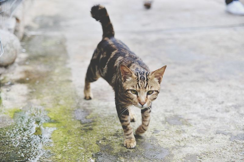 Meow Cats 🐱 Cats Of EyeEm Cat Lovers Cateyes Catstagram Cat Photography Hong Kong Travel Destinations Photograph Outdoors Pets Domestic Cat Animal One Animal Cute Looking At Camera Day Animal Themes Domestic Animals No People Nature EyeEm Selects