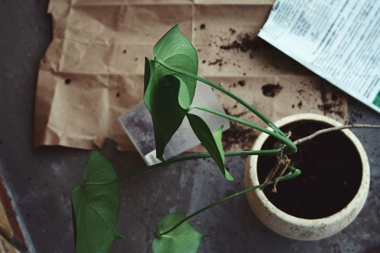 Gardening Green Color Leaf Plant Part Nature High Angle View Growth Plant Focus On Foreground Gardening Equipment Beauty In Nature Equipment Potted Plant Day Indoors  No People Close-up Gardening Still Life Table