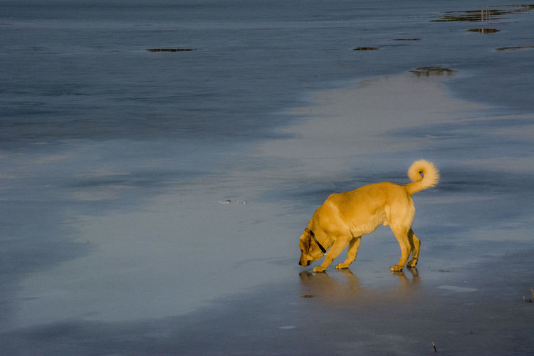 Animal Themes Beach Day Dog Domestic Animals Mammal Nature No People One Animal Outdoors Pets Sea Water