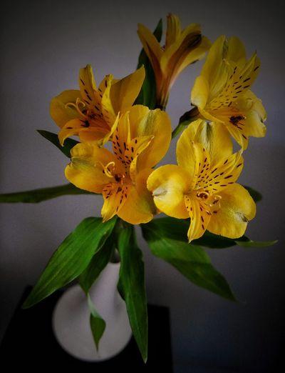 """"""" La gente de un planeta sin flores pensarían que estamos locos de alegría todo el tiempo por tener este tipo de cosas entre nosotros."""" Iris Murdoch Sargadelos Flowers Somosfelices flowers Flower Collection Hello World Decoration"""