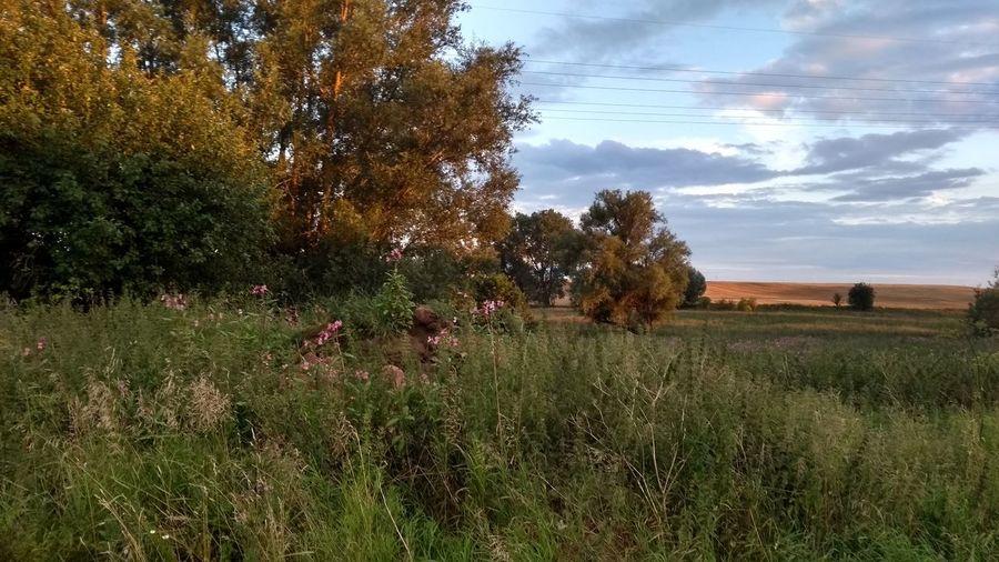 sunset Landscape Landscape