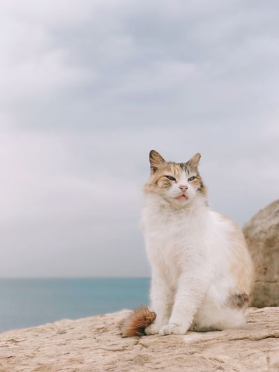 Pet Portraits Domestic Cat One Animal Pets Animal Themes Feline Mammal Domestic Animals Sitting Looking At Camera No People Portrait Outdoors Day Nature מייבתגלים מייאייפון7 Shotoniphone7plus IPhone7Plus מייים ShotOnIphone מייחתול