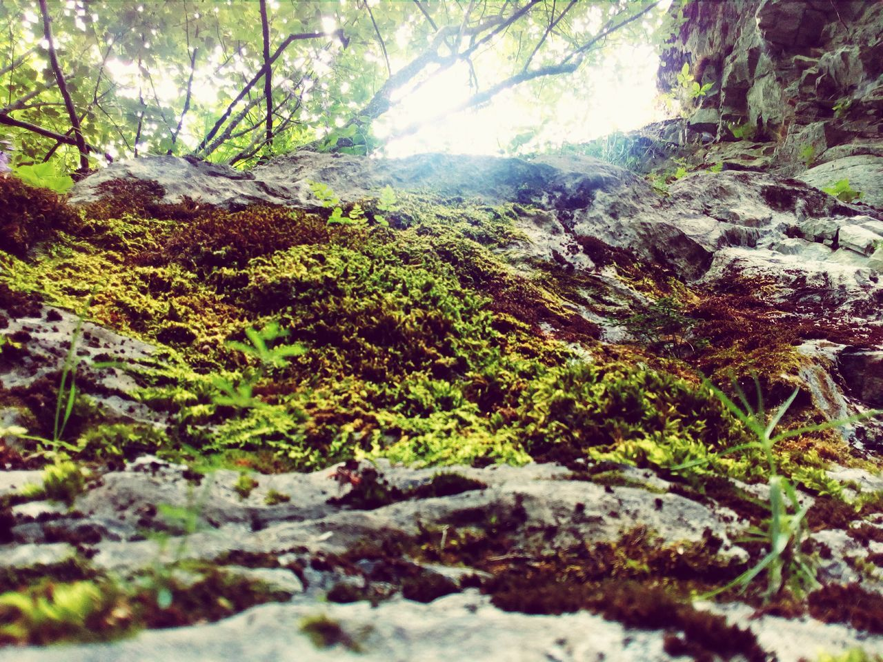 nature, beauty in nature, day, tranquility, forest, no people, mountain, outdoors, tranquil scene, wilderness, growth, landscape, moss, scenics, tree, scenery, close-up