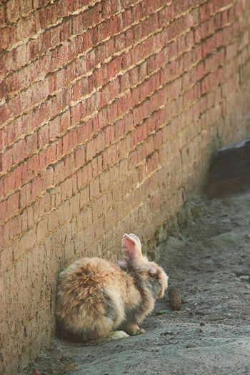 Everybody has the hangover next day... ^^ Easter Isolated Animal Themes Brick Wall Day Daylight Domestic Animals Ears Eastern Purple Coneflower Fur Hangover Hiding Leave Me Alone Mammal No People One Animal Outdoors Rabbit Symbolism EyeEmNewHere Stories From The City