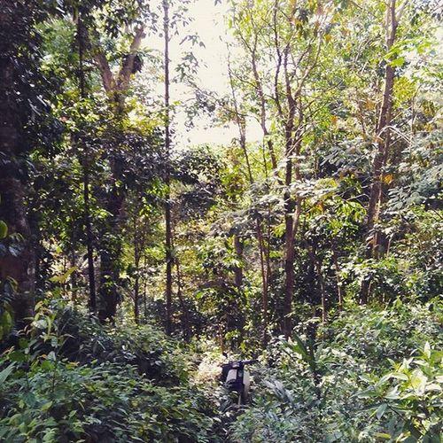 masuk hutan Bukitipoh