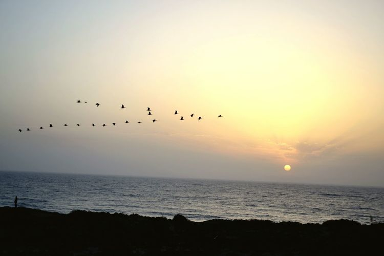 Sunset Flock Of Birds Outdoors Agadir Morocco Souss Marruecos
