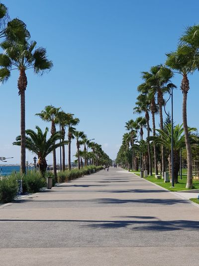 Seaside Tree Sunny Clear Sky Outdoors Sky Road No People City Water Travel Destinations Palm Tree