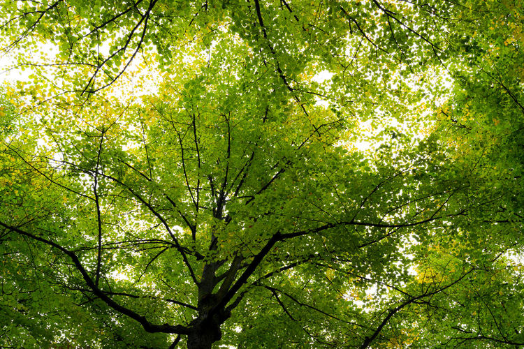 Leaves🌿 Tree Tree And Sky TreePorn Trees Leaves Tree_collection  Treetop Under The Tree