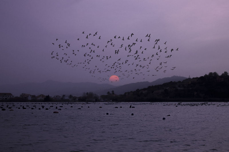 Bird Vertebrate Animal Themes Large Group Of Animals Animal Flying Animals In The Wild Animal Wildlife Sky Group Of Animals Water Flock Of Birds Beauty In Nature Nature Scenics - Nature Silhouette Mid-air Waterfront Tranquility No People Outdoors