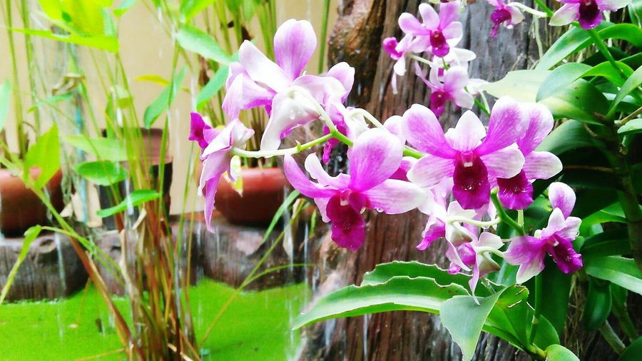 Outdoors Purple Freshness Growth Day Fragility Petal Green Color No People Close-up