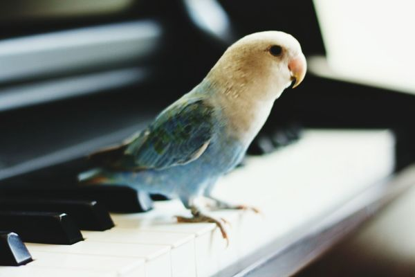 EyeEm Birds Bird Photography Animal Photography Piano EyeEm Nature Lover Playing With The Animals FUNNY ANIMALS Sold On Getty Images Piano Moments