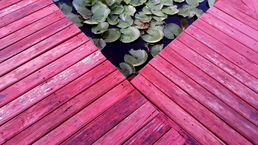 High angle view of green leaves on wood