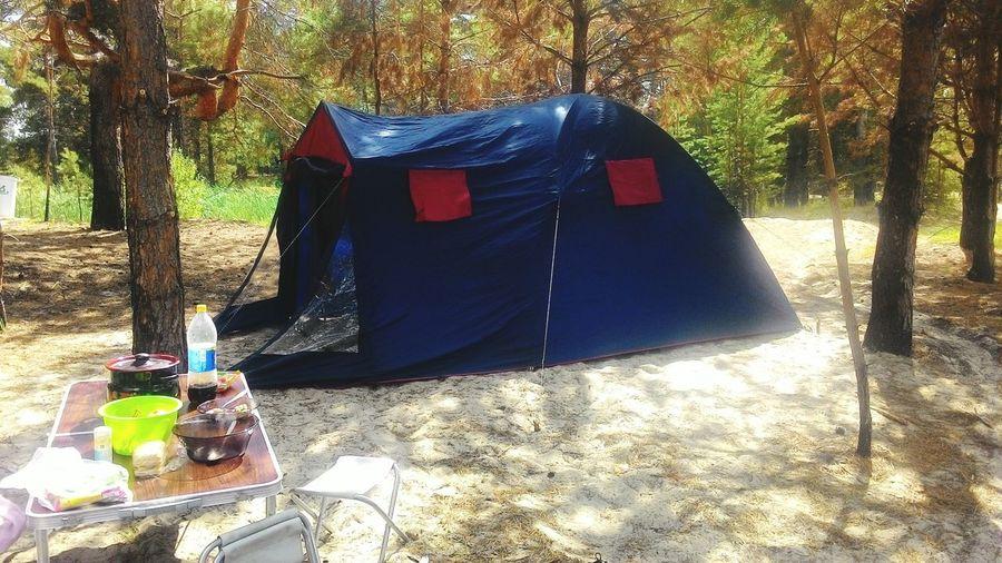 отдых палатка утро Лес тепло Выходные Relax Good Moning Forest Tent