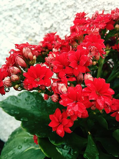 Casanegrito Flowers Red Relaxing OpenEdit Popular Photos Travel Nature Silhouette Tirodojoao
