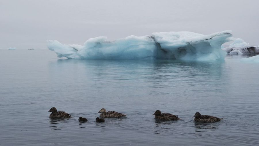 Scenic View Of Jokulsarlon With Ducks And Iceberg Against Sky