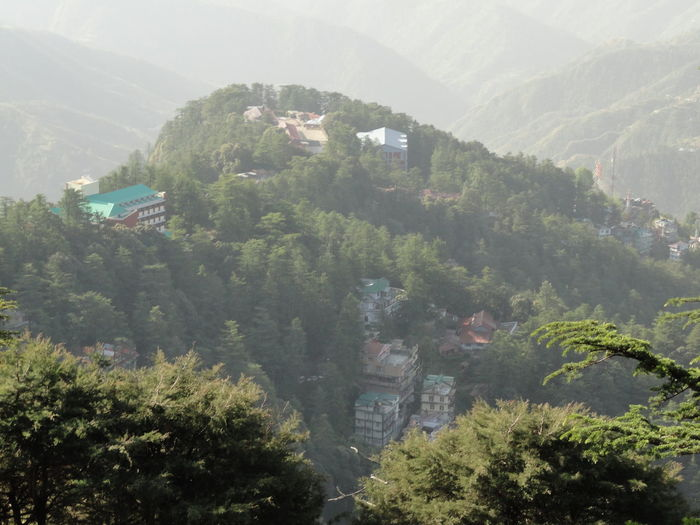 shimla from top of mountain Architecture Building Building Exterior Built Structure City Day Dhouladhar Range Environment Green Color Growth High Angle View House Land Landscape Lower Himalaya Mountain Nature No People Outdoors Plant Scenics - Nature TOWNSCAPE Tree