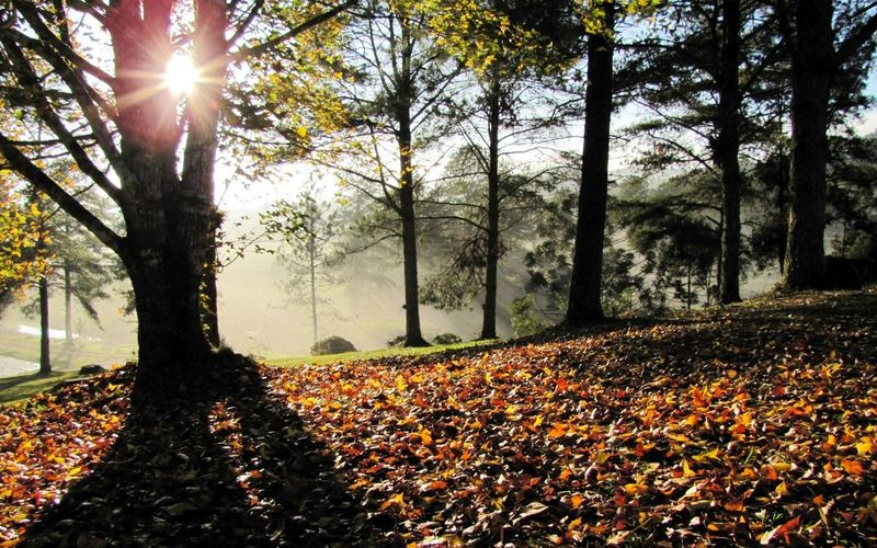 Landscape Nature Campodozinco Light Up Your Life