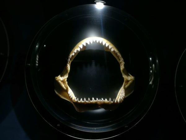 Jaws Aquaria Klcc