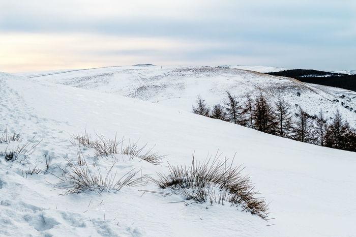 Landscape Landscape_Collection Landscape_photography Melancholic Landscapes Nature_collection Snow Sunrise Light White EyeEm Best Shots