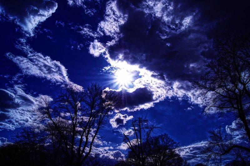 A bright and dramatic sky. Low Angle View Beauty In Nature Sky Tree Blue No People Tranquility Scenics Silhouette Day Exceptional Photographs See The World Through My Eyes EyeEmBestPics EyeEm Best Shots EyeEmNewHere Art Is Everywhere Branch Tree Eyeem Market