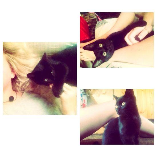 My Little Cat☺ My Love❤